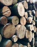 Circuiti di collegamento di albero impilati Immagine Stock Libera da Diritti