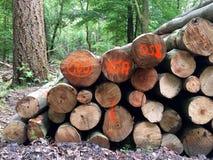 Circuiti di collegamento di albero impilati Fotografia Stock