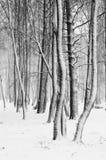 Circuiti di collegamento di albero innevati Immagini Stock Libere da Diritti