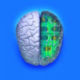Circuito azul do cérebro ilustração royalty free