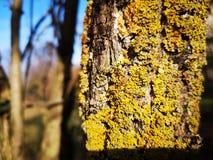Circuito di collegamento di albero muscoso fotografia stock libera da diritti