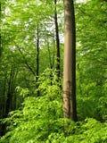 Circuito di collegamento dell'albero. Immagini Stock