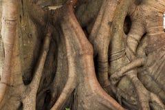Circuito di collegamento dell'albero. Fotografie Stock Libere da Diritti