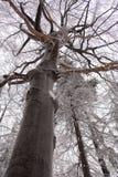Circuito di collegamento dell'albero in inverno Immagine Stock