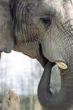 Circuito di collegamento dell'elefante Fotografie Stock