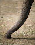 Circuito di collegamento dell'elefante Immagine Stock