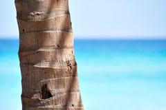 Circuito di collegamento della palma e una bella spiaggia Fotografia Stock Libera da Diritti