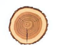 Circuito di collegamento di albero Fotografia Stock