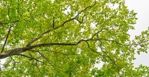 Circuito di collegamento di albero Immagine Stock
