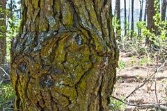 Circuito di collegamento di albero Fotografie Stock