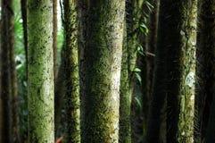 Circuito di collegamento di albero fotografia stock libera da diritti