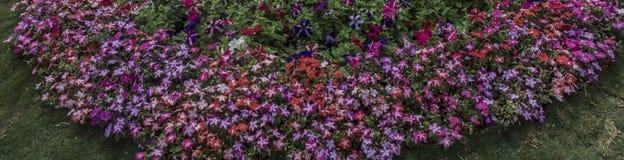 Circulaire - groupe de bannière de fleurs photographie stock