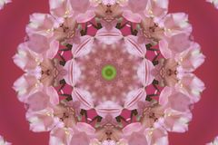 abstract pink with green ornament (mandala, kaleidoscope) Stock Images