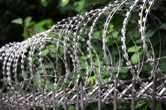 Circular barbed wire. In silver Royalty Free Stock Images