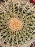 Circular cactus Royalty Free Stock Photos