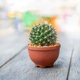 Circular cactus Royalty Free Stock Photo