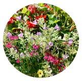 Circular cortada das flores na caixa de janela Fotografia de Stock