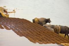 Dried Cow Dung Patties Drying Fuel Ganges India Stock Image