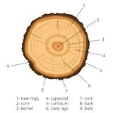 Circular cross-section of a tree with annual rings with signed pieces of wood. Vector illustration. Circular cross-section of a tree with annual rings with vector illustration
