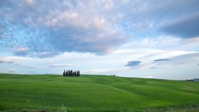 Circular cypress trees of the Val d`Orcia, Tuscany, Italy. Hills of Tuscany. Val d`Orcia landscape in spring. Cypresses, hills and green meadows stock photography