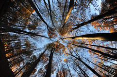 Circular forest. Circular fisheye shot of a forest in autumn Stock Image