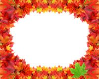 Circular frame from autumn maple foliage Stock Photo