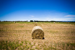 Circular hay bale in a field. Circular hay bale composed of cut and gried pasture grass for use as winter feed for livestock in a field , landscape, view with Royalty Free Stock Photos