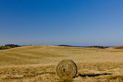 Circular hay bale in a field. Circular hay bale in a newly cut agricultural field landscape under sunny blue sky Stock Photos
