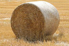 Circular Hay Bale. A large neatly formed golden coloured  hay bale freshly cut in a field prepared for livestock consumption Stock Photography