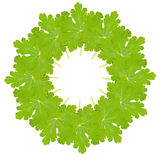 Circular leaf montage Royalty Free Stock Photo
