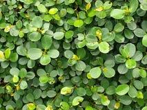 Circular leaves Stock Photography