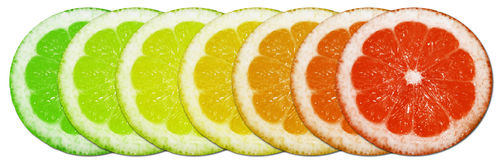 Circular lemons. Slices of colorful lemon slices isolated on white background Royalty Free Stock Photo