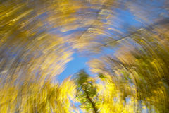 Circular movement. Beech forest in warm tone. Horizontal format Royalty Free Stock Photos