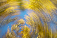 Circular movement. Beech forest in warm tone. Horizontal format Royalty Free Stock Photo