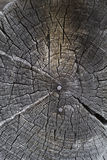 Circular old wood texture with nails Stock Photo