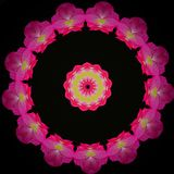 Circular Patter of Hot Pink Flowers. A mandala design created with a kaleidoscope application and an image of nature royalty free stock photo