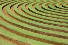 Circular pattern form on grass Royalty Free Stock Image