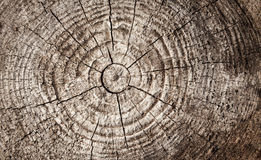 Circular pattern of old brown wooden log Stock Photo