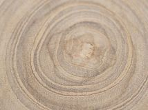 The circular piece of wood cross section with tree ring texture. Circular piece of wood cross section with tree ring texture pattern stock image