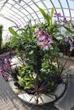 Circular Plantings Royalty Free Stock Photo