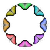 Circular Rainbow Coloured Butterfly Border royalty free stock images