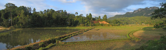 Circular ricefields. From Londa to Kete Kesu - Rantepao - Sulawesi island - Indonesia - Panorama Stock Photos