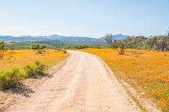 Circular road between indigenous flowers at Skilpad Stock Images