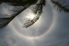 Circular solar halo. A solar halo seen from under a palm in a tropical beach in Mexico Stock Photos