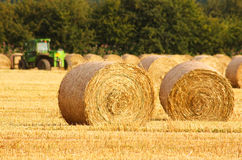 Circular Straw Bales. Freshly rolled golden hay bales in farmers recently harvested agricultural field Stock Images