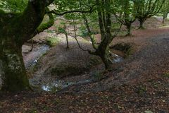 Circular stream in a beech forest. A little river forming almost a circle with some beech trees at the riverside at the Basque Country , Spain stock images