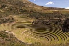 Circular terraces peru top view Royalty Free Stock Image