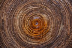 Circular texture of wet wood Stock Image