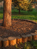 Circular tree base surround bark and grass Stock Photos