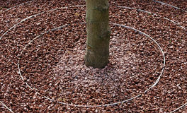 Circular tree surround Stock Images